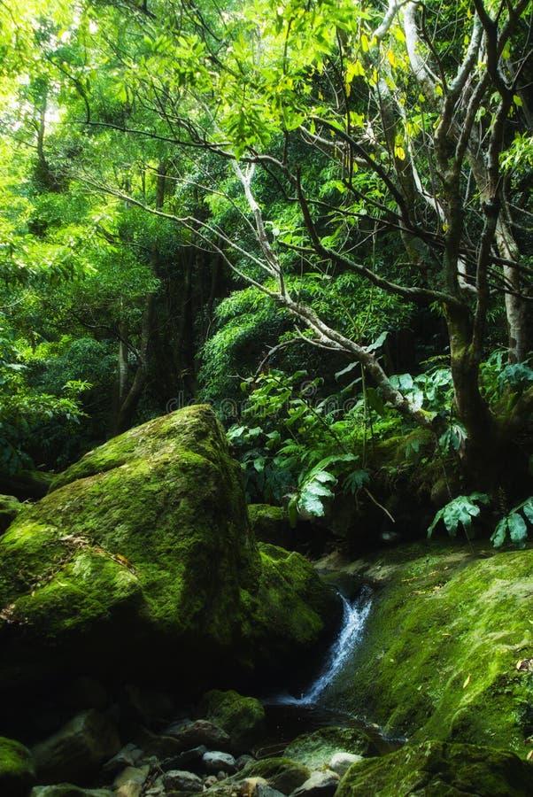 Acores; piccola valle della giungla sui flores fotografia stock libera da diritti