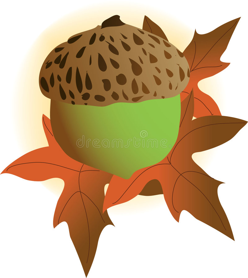 Acorn. A single acorn on an autumn leaf stock illustration