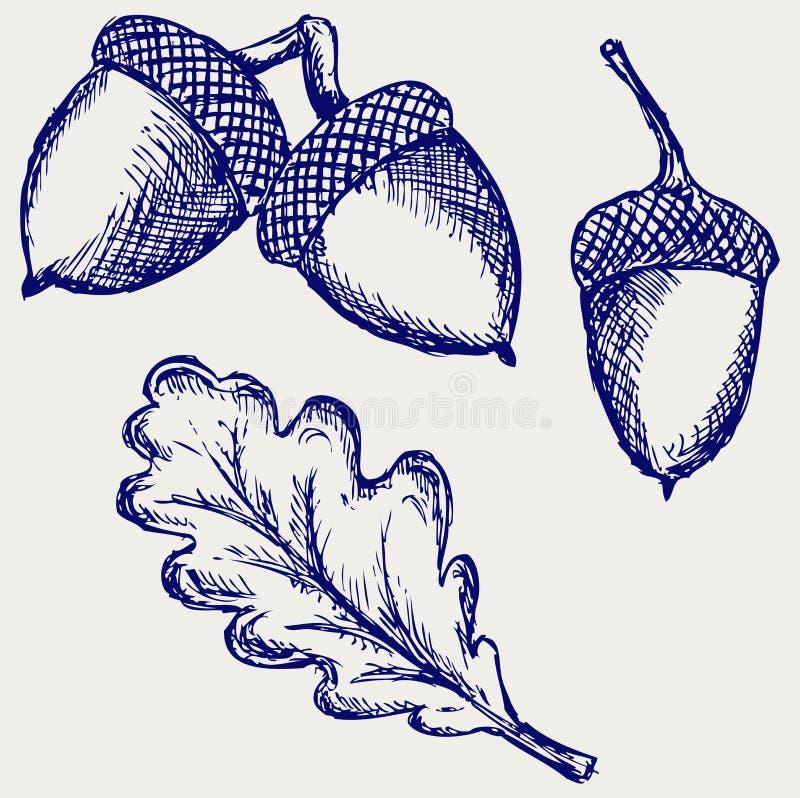 Acorn ilustracji