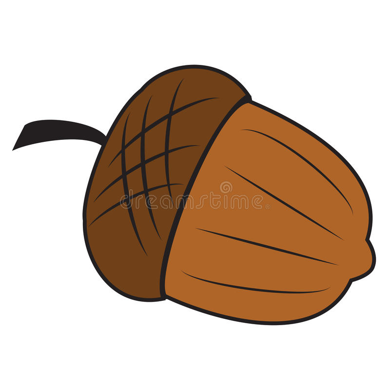 Download Acorn stock illustration. Illustration of seed, nobody - 28102800