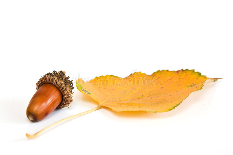 Download Acorn and leaf stock photo. Image of forest, fruit, closeup - 7556212