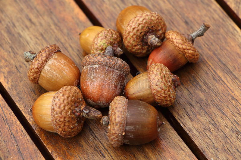 Acorn on a wooden table stock image
