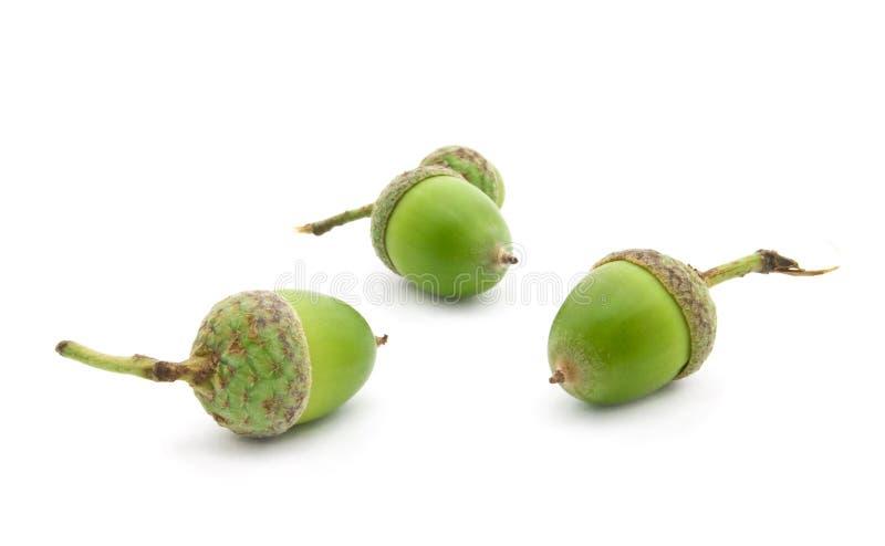 Download Acorns stock image. Image of acorn, life, forest, decoration - 13082549