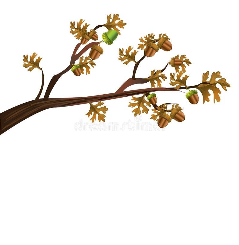 acorns ilustracja wektor