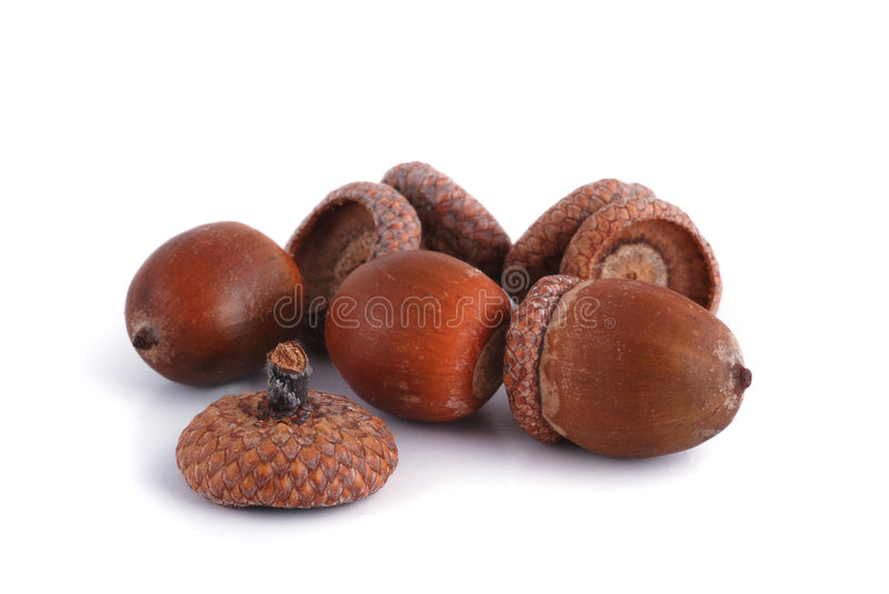 Download Acorns stock image. Image of autumn, creative, autumnal - 3340907