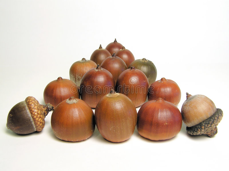 Acorns stock image