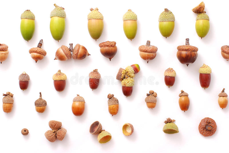 Acorns diversity collection royalty free stock photography