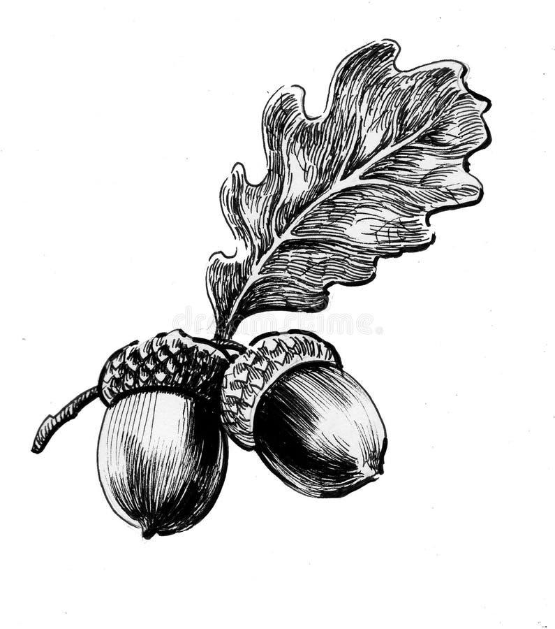 Acorns i liść royalty ilustracja