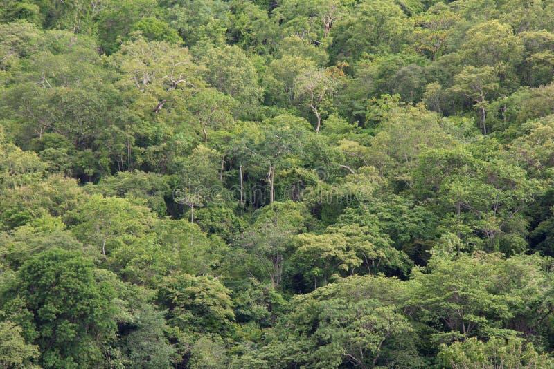 acorns jesień tła granicy projekta lasowy dębowy światło słoneczne zdjęcia stock