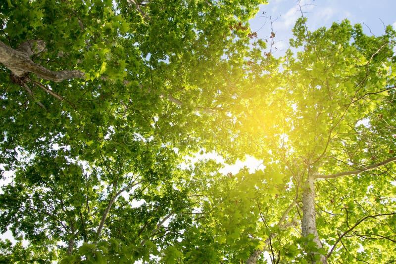 acorns jesień tła granicy projekta lasowy dębowy światło słoneczne zdjęcie royalty free