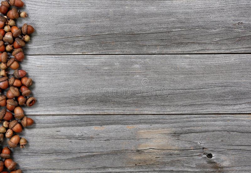 Acorns on left border of aged wood for the Thanksgiving Autumn holiday season. Acorns on left border of weathered wood for the Thanksgiving Autumn holiday season stock photos