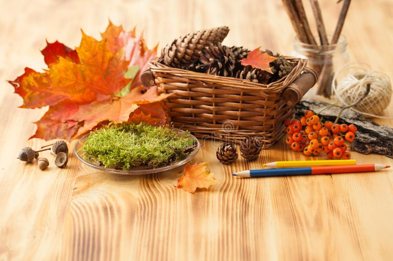 Acorns, pine cones, moss, berries of mountain ash, stones for decorating. Autumn natural material for craft projects with children and the use of interior royalty free stock photos