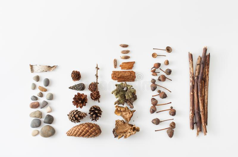 Acorns, pine cones, moss, berries of mountain ash, stones for decorating. Autumn natural material for craft projects with children and the use of interior stock image