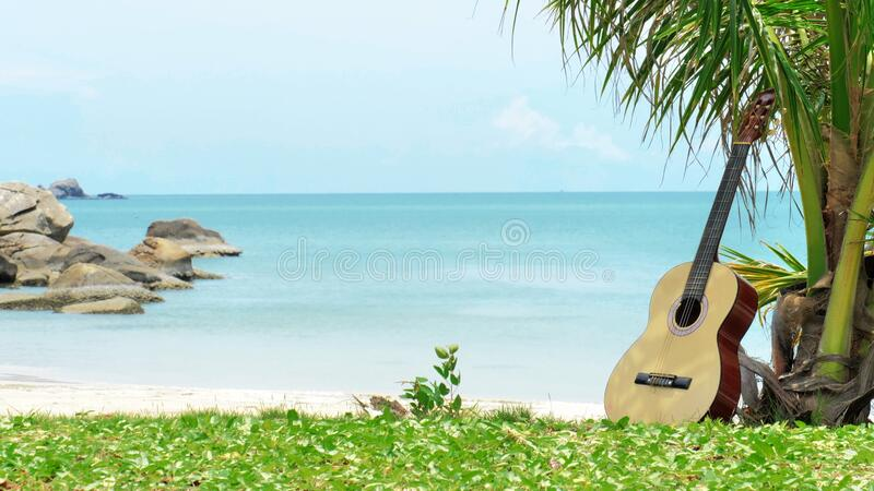 An acoustic guitar under a palm stock photography