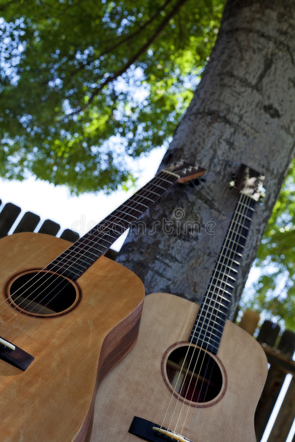 Acoustic Guitars Against a Tree stock photo