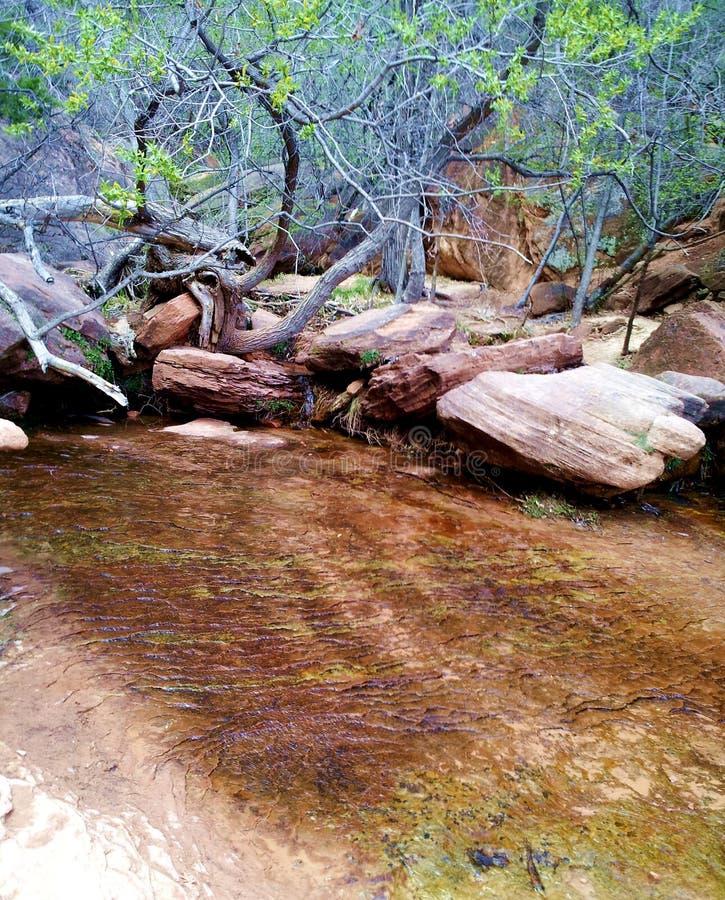 Acqua bassa nel parco nazionale di zion immagini stock libere da diritti