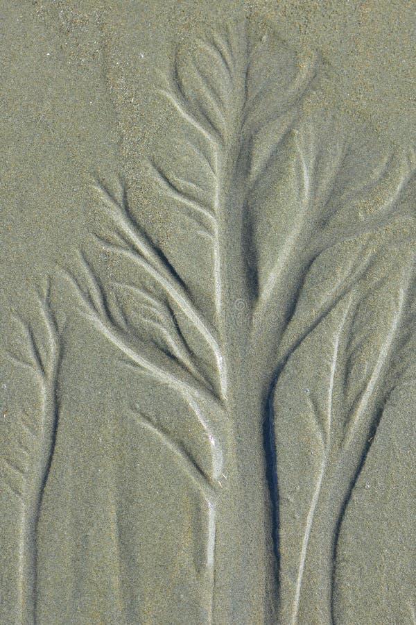 Acqua che assorbe la sabbia della spiaggia immagine stock