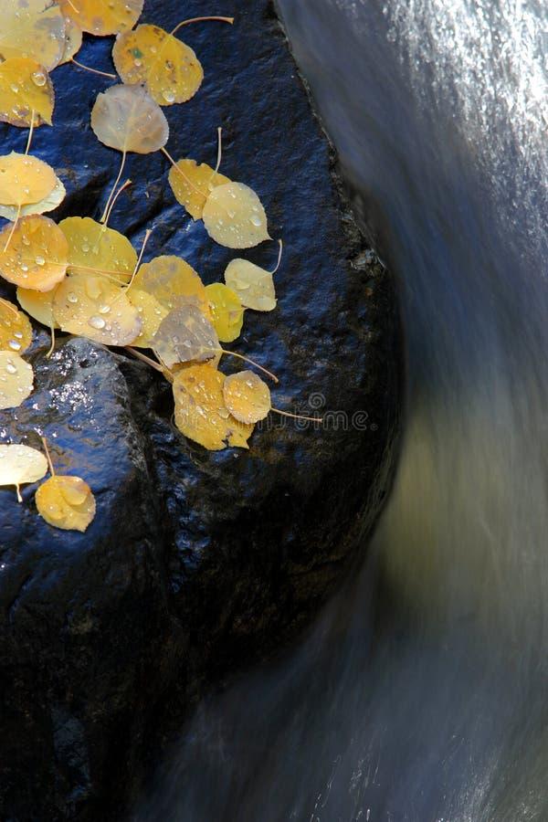 Acqua che curva intorno alla roccia con i fogli della tremula fotografia stock