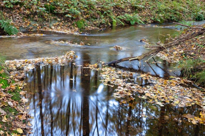 Acqua corrente nella foresta olandese di autunno dell'otturatore lungo della corrente immagine stock libera da diritti