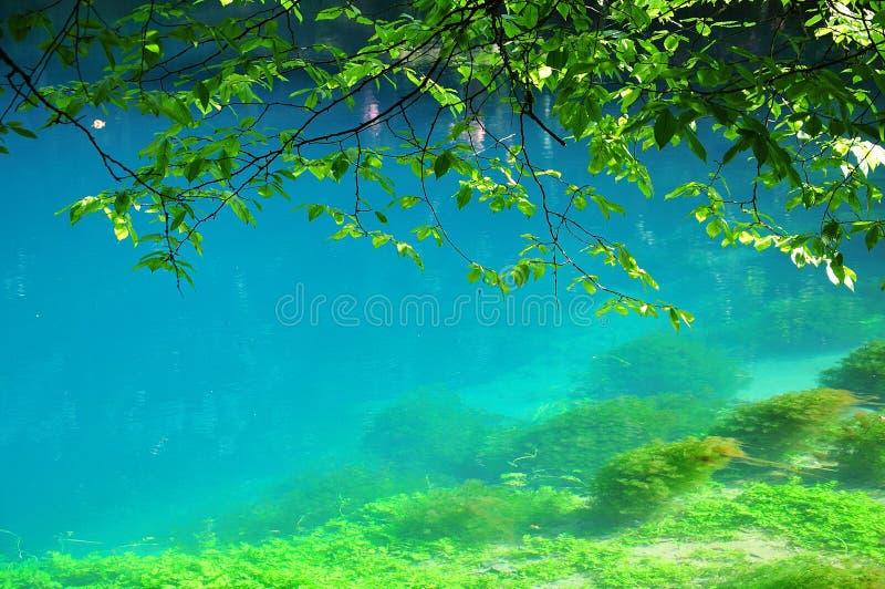 Acqua del turchese alla fonte di fiume Blau in Blaubeuren, Germania fotografia stock libera da diritti
