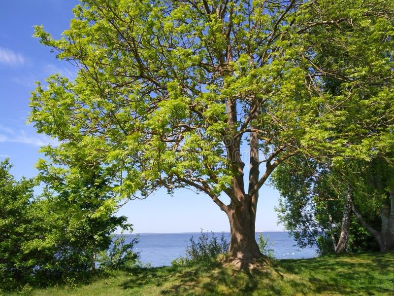 Acqua dell'albero suny fotografie stock