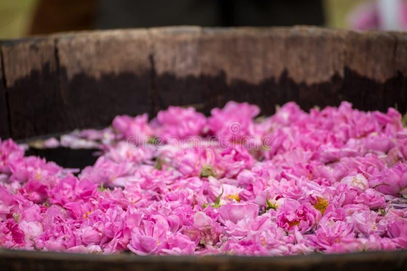 Acqua di rose di fermentazione immagine stock