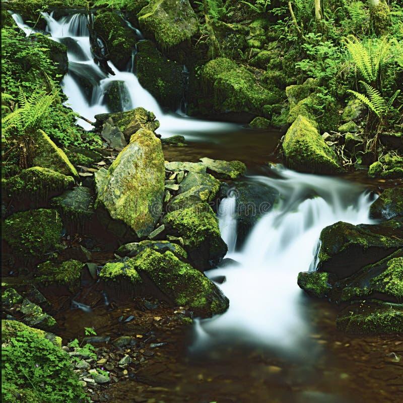 Download Acqua e felci immagine stock. Immagine di fiume, pascolo - 55362775