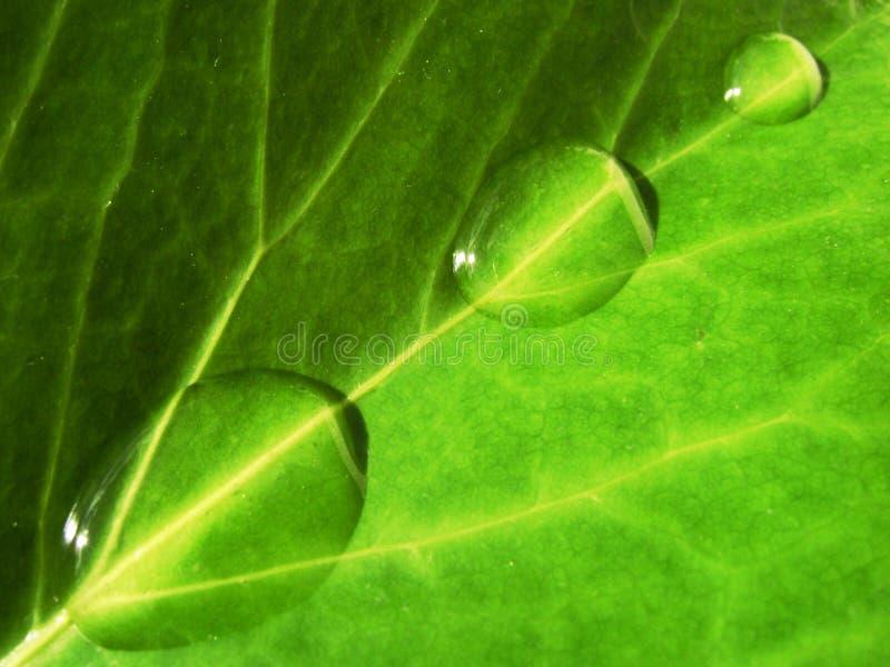 Acqua e natura fotografia stock libera da diritti