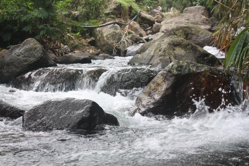 Acqua in foresta fotografia stock