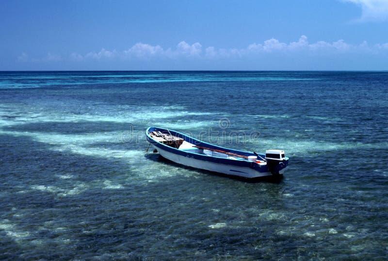 Acqua libera Scogliera-Cancun Messico fotografia stock libera da diritti