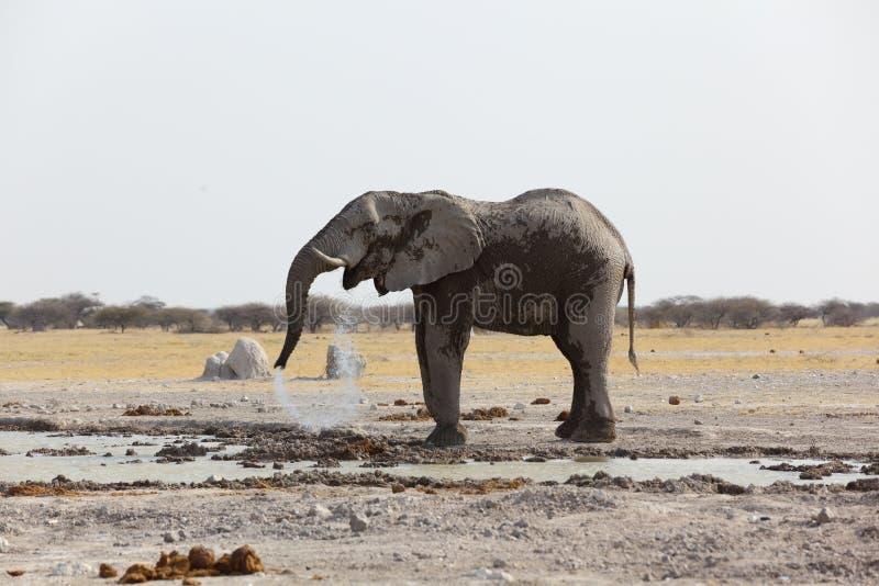Acqua potabile dell'elefante in pentola NP di Nxai immagine stock