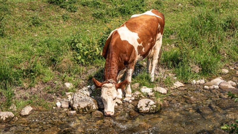Acqua potabile di un piccolo ruscello in Svizzera fotografia stock libera da diritti