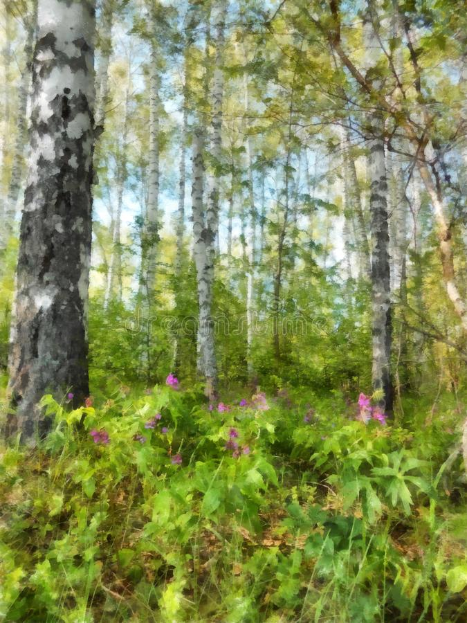 Acqua russa del paesaggio della molla della foresta snella alta della betulla bianca illustrazione di stock