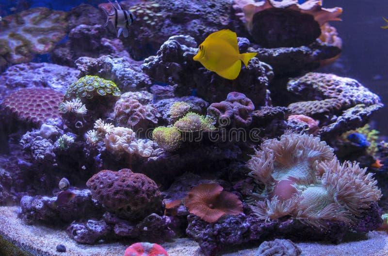 Acqua salata Coral Reef fotografia stock libera da diritti