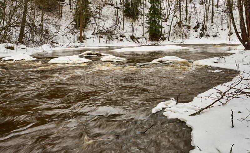 Acqua scura che entra velocemente nel tempo di molla in fiume in The Creek immagine stock