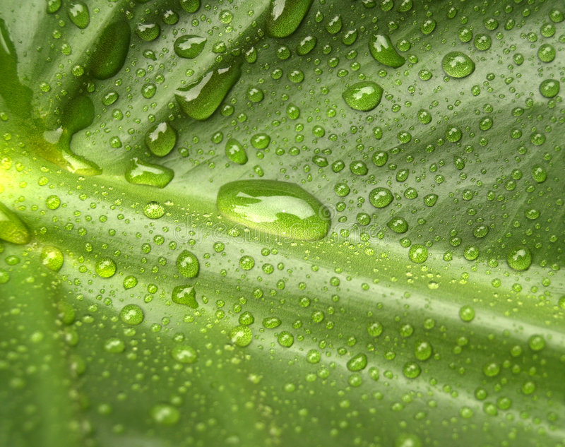 Acqua sul foglio 2 fotografie stock libere da diritti