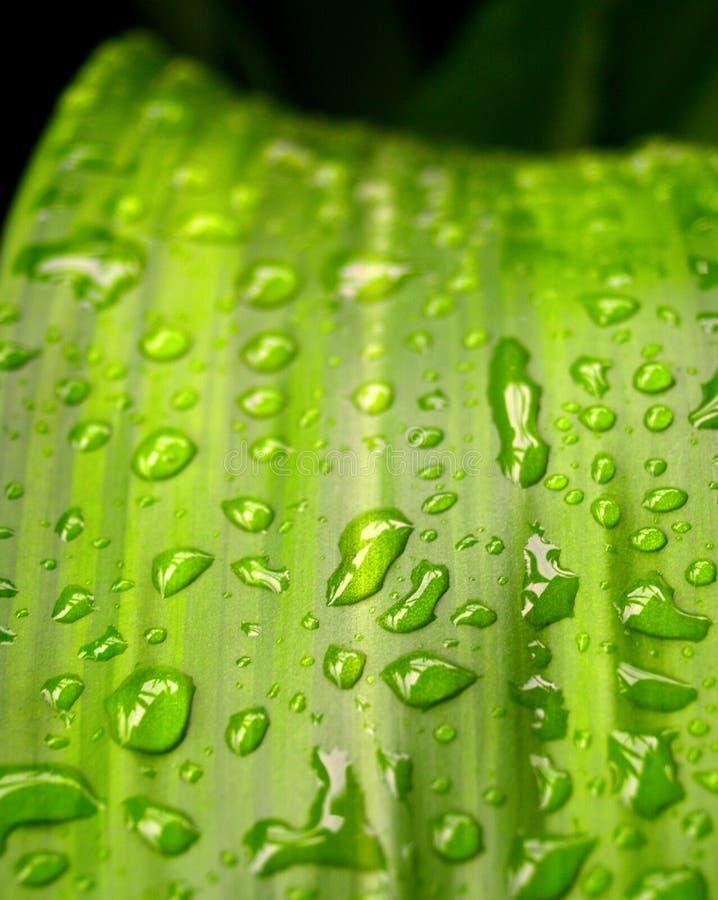 Acqua sulla pianta fotografia stock libera da diritti