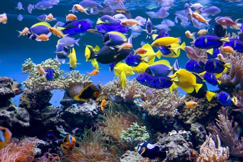 Acquario fotografie stock libere da diritti