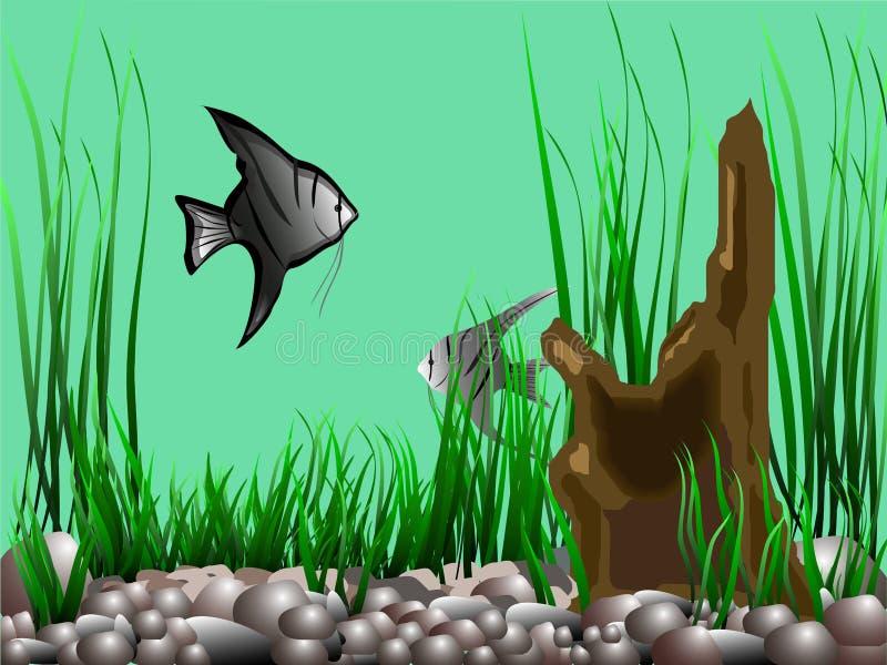 Acquario con il angelfish, la pianta acquatica e uno strappo royalty illustrazione gratis