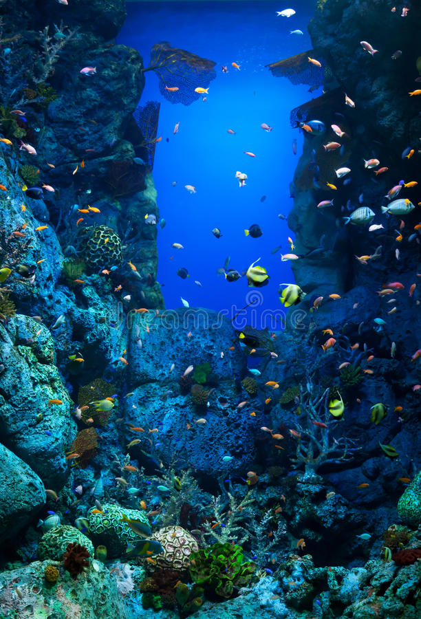 Acquario con molte varietà di coralli e di pesci di mare variopinti immagine stock