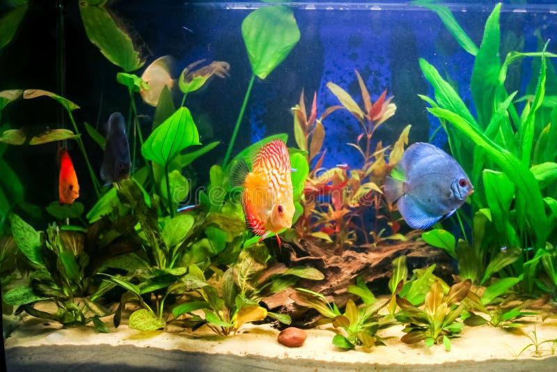 Acquario d 39 acqua dolce fotografia stock immagine di for Pesci d acqua dolce acquario
