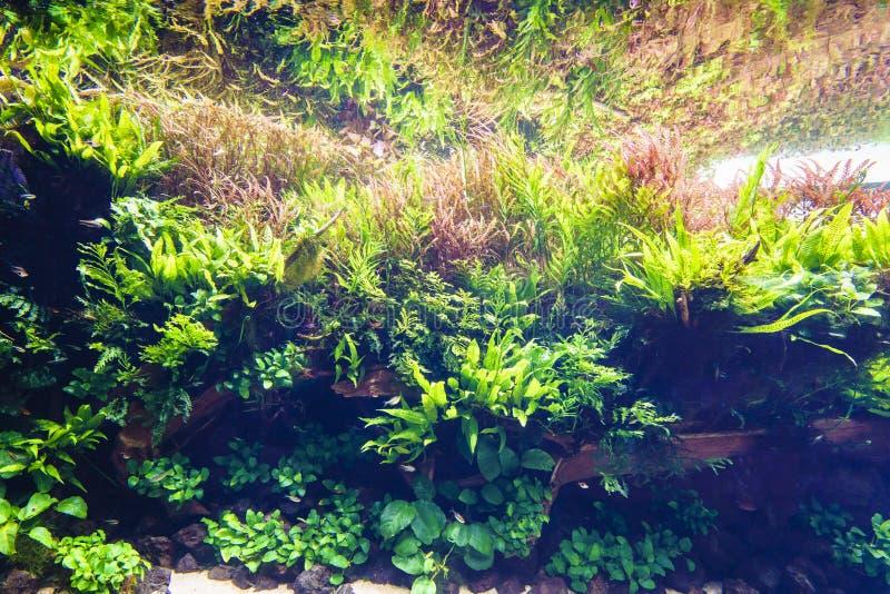 Acquario d'acqua dolce della natura nello stile di Takasi Amano fotografia stock libera da diritti