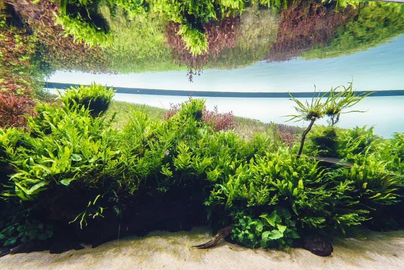 Acquario d'acqua dolce della natura nello stile di Takasi Amano fotografia stock