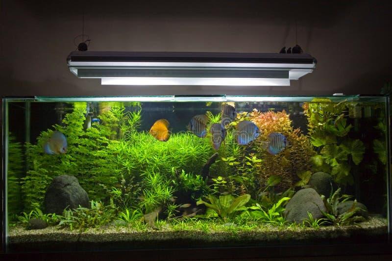 Acquario d'acqua dolce tropicale fotografie stock libere da diritti