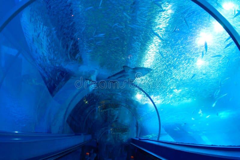Acquario del tunnel fotografia stock libera da diritti