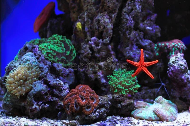 Acquario dell 39 acqua salata fotografia stock immagine di for Acquario acqua salata