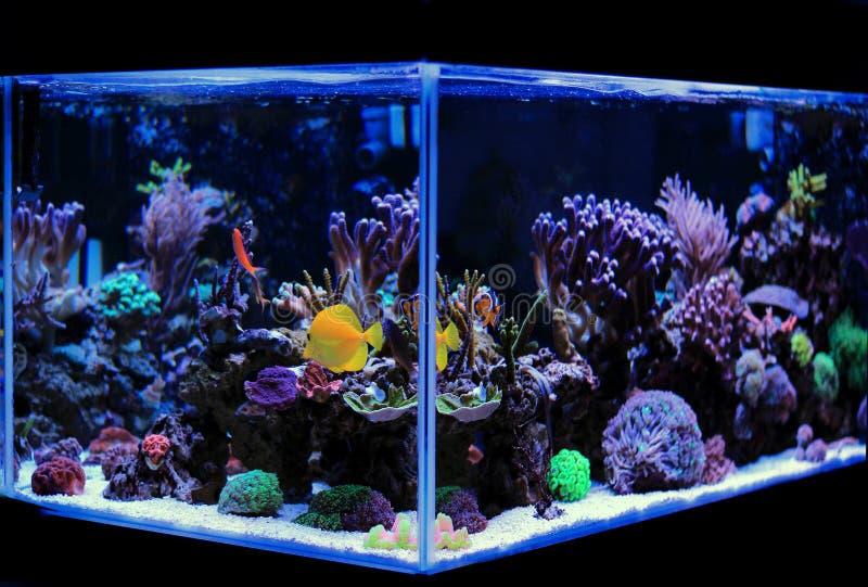 Acquario dell'acqua salata, scena del carro armato della barriera corallina a casa fotografia stock libera da diritti