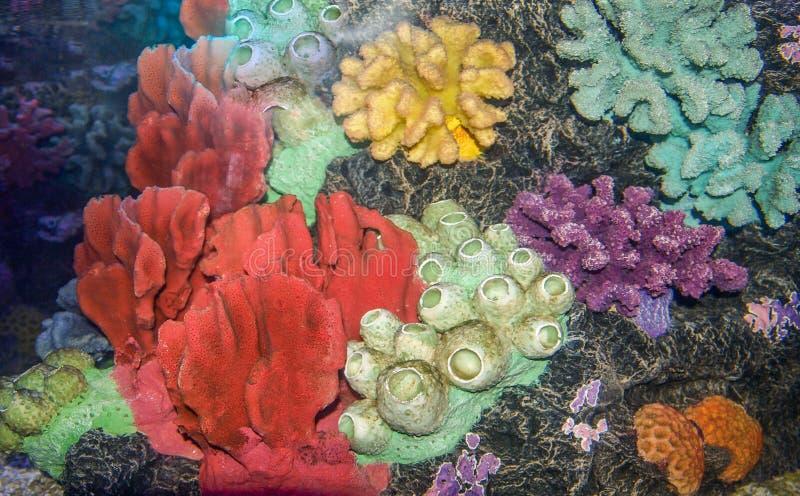 Acquario di corallo variopinto fotografia stock