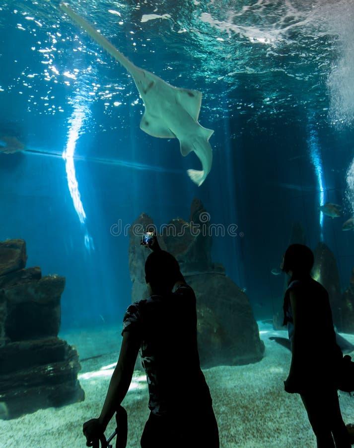 Acquario di Genova, Italia fotografia stock
