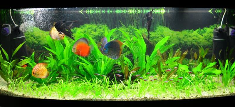 Acquario domestico con i pesci e le piante del discus for Acquario casa prezzi